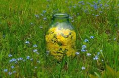 Dandelion oil is unbelievably easy to make and can be used in so many different ways. It heals pain and sore muscles, moisturizes dry skin and so much more. Dandelion Uses, Dandelion Recipes, Dandelion Health Benefits, Medicinal Weeds, Green Witchcraft, Aromatherapy Candles, Moisturizer For Dry Skin, Edible Plants, Doterra Oils
