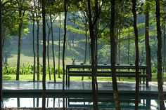 View of the borrowed landscape looking east through the forest grove from the entry | Archnet