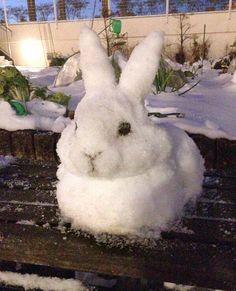 Winter rabbit snowman