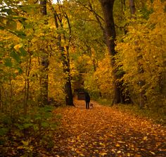 17 pictures that prove fall is the best season - The jewel box of autumn opens. Tree Lined Driveway, Changing Leaves, Winding Road, Tourist Places, Best Seasons, Walk In, Landscape Photography, Fall, Autumn