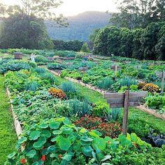 Dreams for the garden corner.