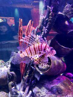 SEA LIFE Melbourne Aquarium Travel Ideas, Travel Inspiration, Travel Tips, Group Travel, Family Travel, Sea Life Melbourne Aquarium, Merlin Entertainments, Places Around The World