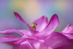 Tiny worlds: The winners of the 2020 Macro Art Photography Awards Photography Competitions, Photography Contests, Photography Awards, Drone Photography, Stunning Photography, Fine Art Photography, Passion Fruit Plant, Smithsonian Photo Contest, Atlanta Botanical Garden