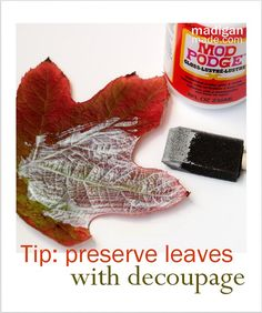 Want to preserve your fall leaves to decorate with?  Do it the day you pick them - paint decoupage on one side, let dry, then apply to other side let dry. It works!