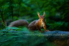 Evening Light by `WNPhotography on deviantART
