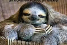 Sloth @Kenna Wild