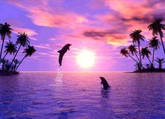 Dolphins leaping at sunset in purple ocean by palm trees Beautiful Sunset, Beautiful World, Beautiful Friend, Beautiful Creatures, Animals Beautiful, Ocean Life, Sea Creatures, Pretty Pictures, Beautiful Landscapes