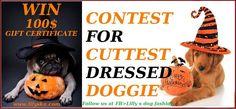 HALLOWEEN DOG FASHION CONTEST Dog Fashion, Dog Halloween, Fashion Boutique, Dogs, Pet Dogs, Doggies, Dog