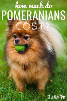 20 Best Dog Breeds Dog Breed Lists Best For Guides Images