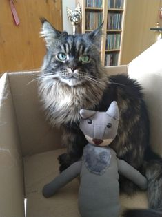Maine Coon mag ihre Stoffkatze... Mystery, Maine Coon, Spirit, Cats, Animals, Maine Coon Cats, Fabric Animals, Arts And Crafts, World
