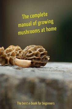 15 g frais CHANTERELLE jaune mycélium Cantharellus cibarius   Etsy Mushroom Seeds, Mushroom Spores, Porcini Mushrooms, Stuffed Mushrooms, Oyster Mushroom Spawn, Culture Champignon, Puffball Mushroom, Lobster Mushroom, Growing Mushrooms At Home