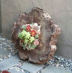 Grow succulents in the center of cypress wood. It would be easy to do & offer a beautiful landscape piece.