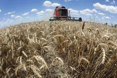 Tomada de crédito rural empresarial soma R$ 33,4 bilhões na safra atual - http://po.st/UJvTlQ  #Setores - #Aporte, #Grãos, #Recursos