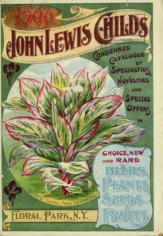 John Lewis Childs, Inc. (1900) -   Rainbow Canna