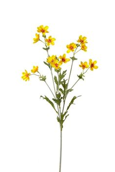 August Grove Min Cosmos Branch (Set of Flower Color: Yellow Long Flowers, Simple Flowers, Faux Flowers, Yellow Flowers, Colorful Flowers, Color Yellow, Art Party Invitations, Simple Flower Design, Wildflower Tattoo
