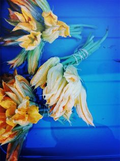 ourcolorfulseoul:(via (2) zucchini flowers | Color my World | Pinterest)
