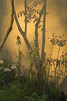 Sarah Price - Chelsea 2007 Plant Design, Garden Design, Gilles Clement, Meadow Garden, Flower Landscape, Chelsea Flower Show, Colorful Garden, Garden Planning, Garden Inspiration