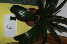Praktické dovednosti - starost o květiny, leštění listů...