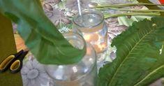 Liście chrzanu są jedyną rośliną, która potrafi wyciągać sól przez pory skóry - Smak Dnia Glass Vase, Plants, Instagram, Plant, Planets