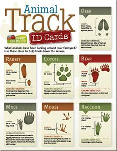 Animal Track ID Cards- What wild animals have been lurking around your farmyard? Use these clues to help track down the answer. Scout Activities, Nature Activities, Activities For Kids, Stem Activities, Outdoor Education, Outdoor Learning, Cub Scouts Bear, Tiger Scouts, In Natura