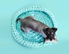 The cutest pet beds!