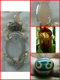 lucky stone agate