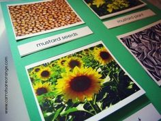 Preschool botany seed matching activity for young kids...