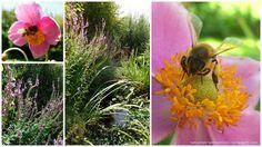 Floral Arrangements, Bouquet, Inspiration, Flowers, Plants, Flower Gardening, Nature, Garten, Ideas