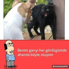 Sevmiyom garıyı. @memduhiyibilir  #mizah #komik #komedi #caps #karikatür #karikatürler #istanbul #ankara #izmir #sayko #kedi #kedicikler #ilginç #9gagturkey http://turkrazzi.com/ipost/1516087611563045968/?code=BUKOaZvlfRQ