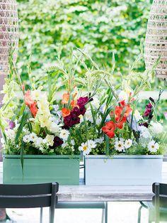Die Gladiole steht symbolisch für Stärke, Sieg und Stolz und verkörpert diese Bedeutung mit ihrer beeindruckenden Größe und aufrechten