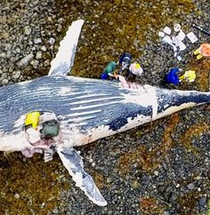 Humpback Whale Drone Photo