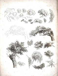 Botanical - Black and White - Tree sketches 1