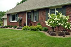 """""""A flowering tree and climbing flower in this clean, modest front yard landscaping raise both the visual height of the yard itself but also the classiness of the home overall. Make sure you add a variety of heights in your landscaping for maximum curb appeal."""""""