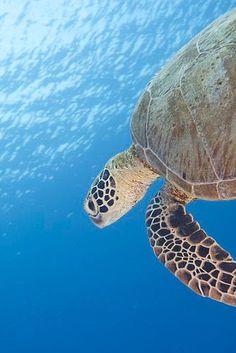 Tubbataha Reefs Natural Park (Foto: Jayvee Fernandez) http://www.zuidoostaziemagazine.com/unesco-werelderfgoed-in-de-filipijnen/#