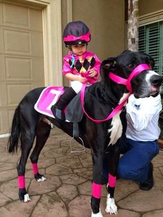 Great Dane Dog dressed up as a Horse giving a Little Girl a Pony Ride Pet Halloween Costumes, Pet Costumes, Cool Costumes, Costumes 2015, Large Dog Costumes, Costume Ideas, Halloween Couples, Funny Costumes, Costume Contest
