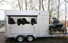 Shetlands and a carriage trailer.