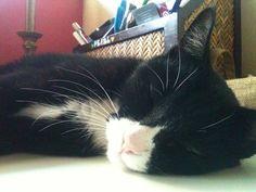 My sweet Professor Meow (or Jessie)