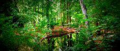 Green Lush by Lars Green / 500px