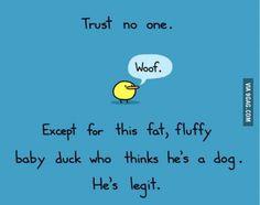 Woof duck.