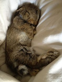 Snoozy bunny