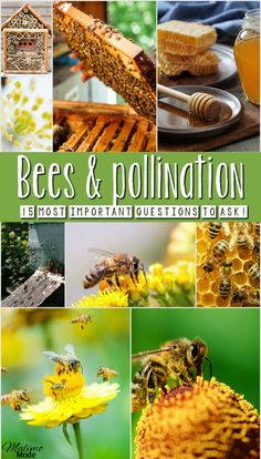 Bees and pollination - the 15 most importan questions to ask! (Especially no.15!) Tips on how to teach children about the topic, and help save the bees! Combine reading, science, biology and crafts with two different projects!