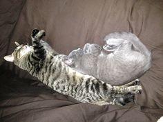 Graf and Roxy sleeping together