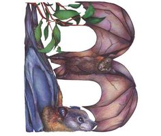 B is for Bat!
