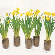 Delightful Daffodil Centerpieces | Karen Bussen | The Daily Meal