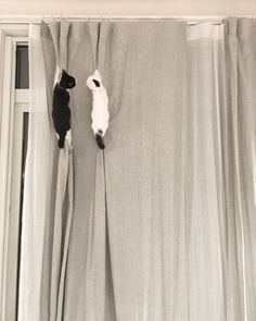 Funny Cats Up In The Air - World's largest collection of cat memes and other animals Funny Cats, Funny Animals, Cute Animals, Funny Horses, Crazy Cat Lady, Crazy Cats, I Love Cats, Cool Cats, Kittens Cutest