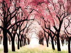 Large pink decor for girls room, cherry blossoms, 30x40 Wonderland, Whimsical baby girl nursery theme