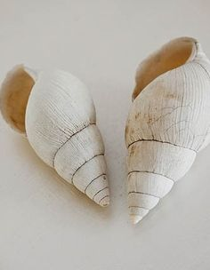 shells...so pretty. An inspiration photo.