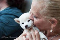 Mame Shiba puppy Shiba Puppy, Shiba Inu, Pet Collars, Husky, Puppies, Pets, Friends, Animals, Amigos
