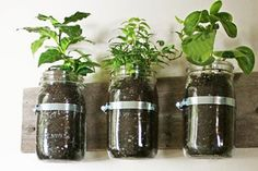Pretty cute idea for upcycling jars -- not sure if I can find the metal loops. No drainage?