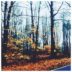 Fall trees        #fall #winter #trees #leaves #beautiful #beauty #love #aesthetics #photography #photographer #travel #traveler #road #driving #instagram #nature #creation #explore #discover #vsco by c.pphotography
